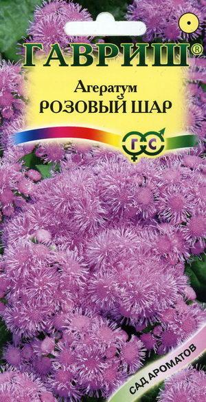 Цветы однолетники долгоцветущие